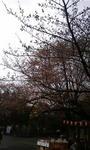 上野公園前_20090321.jpg